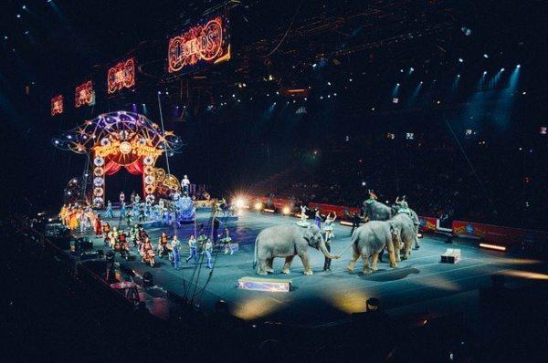 Francia prohíbe el uso de animales salvajes grandes en los circos