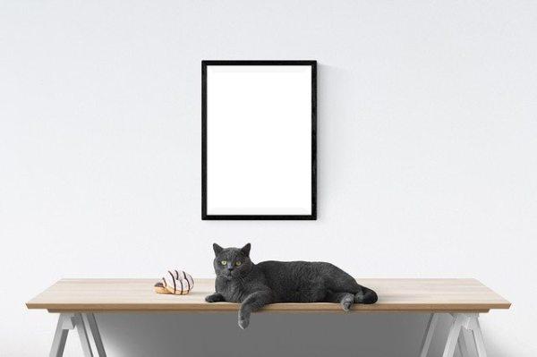 Los gatos se adueñan de 12 reconocidas obras de arte en Valencia