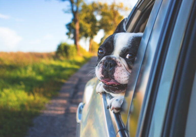 Los taxis para mascotas llegan a La Coruña. Taxi Guau