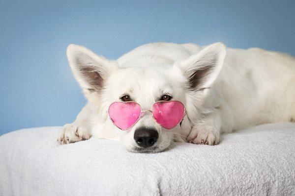 La mejor medicina para el corazón: el cariño de un perro