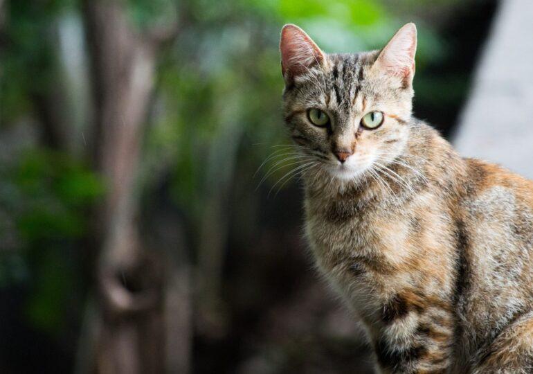 Rescatan a un gato que llevaba atrapado dentro de un contenedor de ropa 3 días