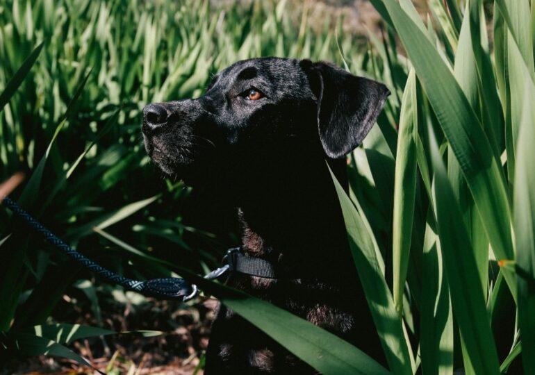 Se pone en marcha el programa piloto de terapia asistida con perros para víctimas de violencia en Cáceres