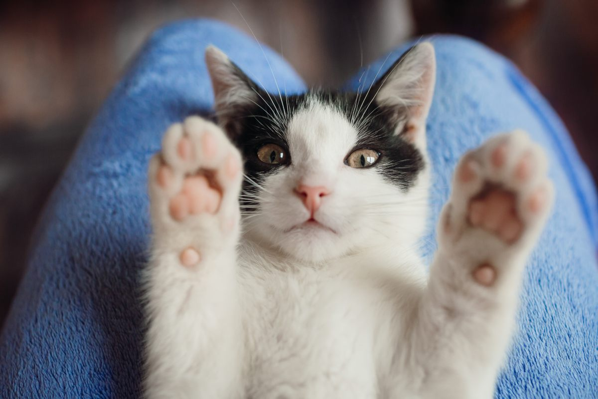 Gato Animales