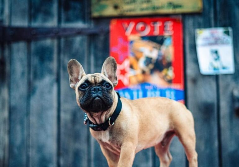 Wilbur, el perro que es alcalde de un pueblo de Kentucky