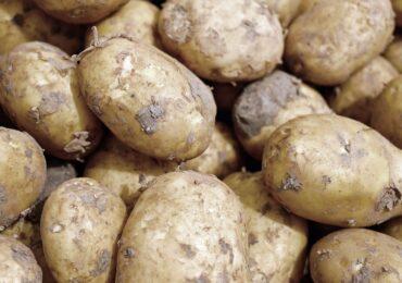 Las exportaciones hortofrutícolas murcianas resisten a la pandemia en 2020