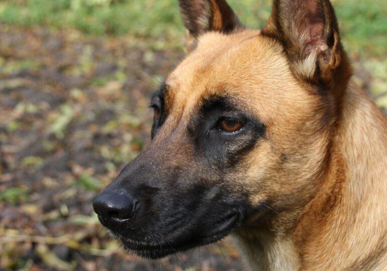 Un estudio apunta que los perros pueden detectar positivos en COVID-19